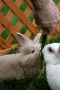 Babeczki wiosenne i wielkanocne: stokrotki, króliczki i owieczki (dekoracja)